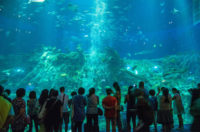 chinese-sturgeon-aquarium
