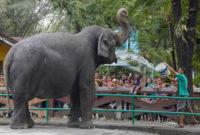 manilazoo-elephant
