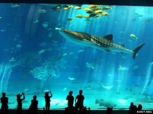 ocean-park-grand_aquarium