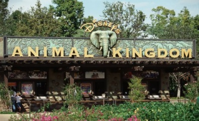 disney-animal-kingdom2