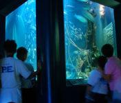 subic-aquarium