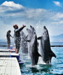 subic-dolphins-friends