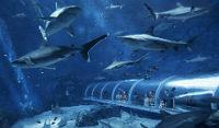 seaaquarium-sharksea_240x140